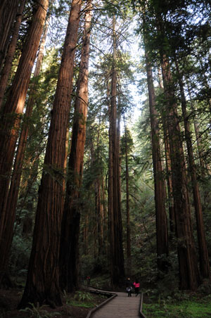 Muir Woods National Monument, named in Muir's honor, continues to be a testament to his relevance in society today, inspiring others in a spirit of conservation to create a positive lasting impact on the natural world.
