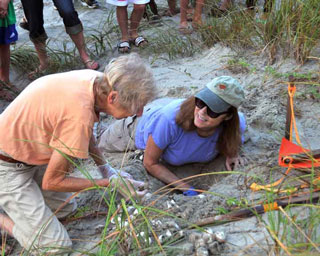 Mary Alice and other members of the Island Turtle Team do all they can to protect the nesting sites of sea turtles on the Isle of Palms and Sullivan's Island, barrier islands near Charleston, South Carolina. Here, Mary Alice (kneeling wearing blue shirt) and other volunteers are preparing to move a nest of loggerhead sea turtle eggs to higher ground for safety. Photo by Barb Bergwerf.