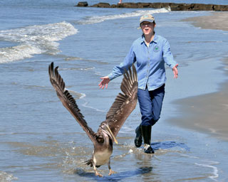 "Mary Alice has an interest in all kinds of coastal wildlife. In October 2016, she helped to rescue this juvenile female pelican, which was struggling to find food in her natural habitat on the coast of South Carolina. Mary Alice took the bird to receive care and rehabilitation at the Center for Birds of Prey at the Avian Conservation Center in Awendaw, South Carolina. At the end of March 2017, Mary Alice was invited by the Center for Birds of Prey to participate in the release of the young pelican she had rescued.. Although the bird walked out toward the water with Mary Alice and spread its wings, the pelican did not want to fly away that day. ""I fear she is habituated to humans and won't make it in the wild,"" says Mary Alice. ""Without a flock to support her, she'd fail to thrive."" The bird will be taken to a protected environment where she can live with other non-releasable pelicans."