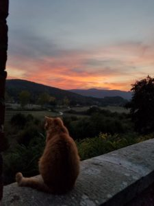 Oliver enjoying the same sunset.