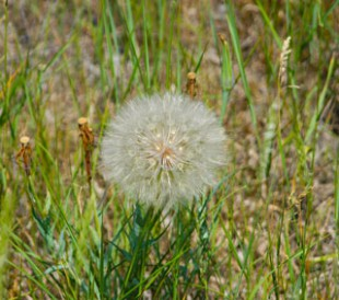 Mom Blogs: Writing in the Weeds