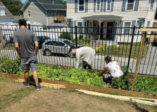 Harvesting Stories: Cambodian Gardens of Lowell, MA
